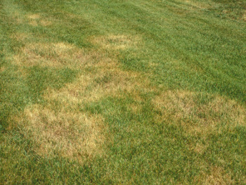 mineral deficient grass